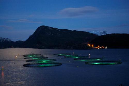 Đầu tư 3,5 triệu USD phát triển công nghệ nuôi cá hồi