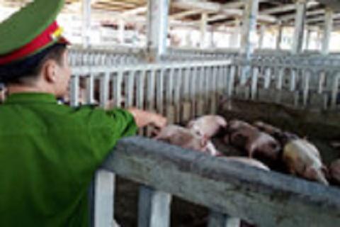 Sử dụng chất cấm trong thức ăn chăn nuôi phạt đến 200 triệu đồng