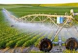 Kiều bào về quê đầu tư nông nghiệp thông minh