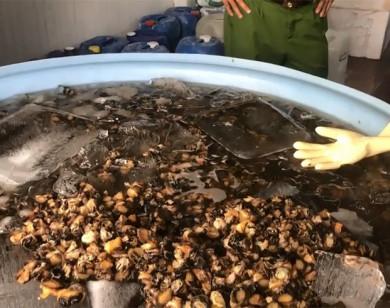 TP Hồ Chí Minh: Phát hiện 1,3 tấn ốc ngâm hóa chất trước khi bán cho tiệm ăn, siêu thị